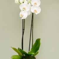 timeless amandas flowers
